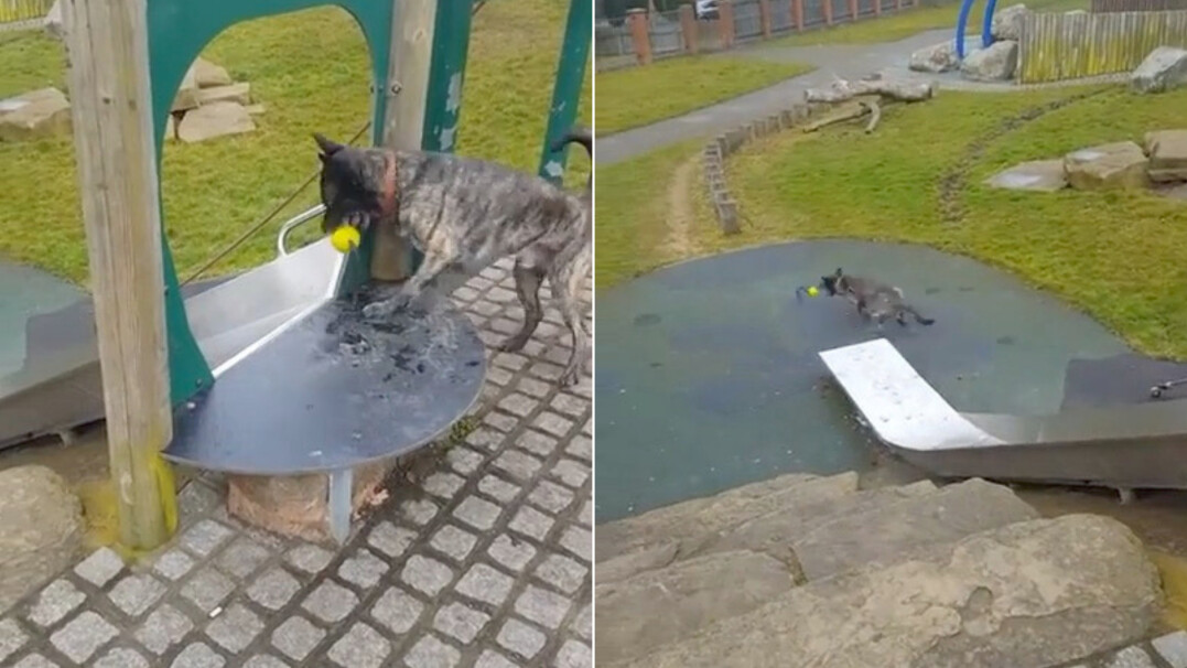 Dla tego psa brak kompana do zabawy nie jest problemem