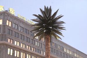 Na dziesiąte urodziny palma dostanie oświetlenie