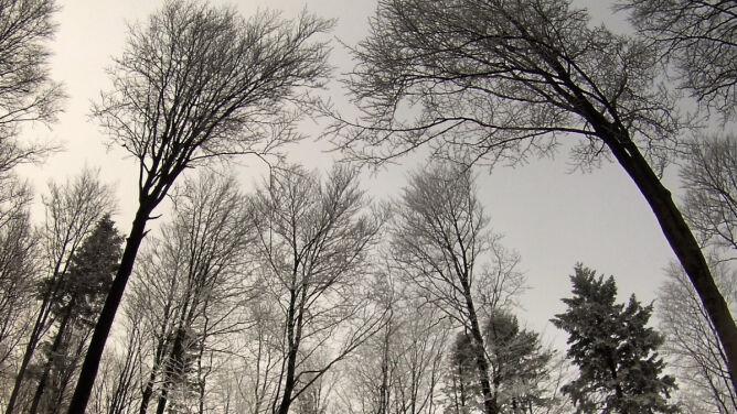 Prognoza pogody na dziś: niebo zasnują chmury. 11-20 stopni