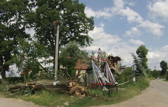 Powalone drzewa. Krzyż - nienaruszony (fot. Kasia Karpa)