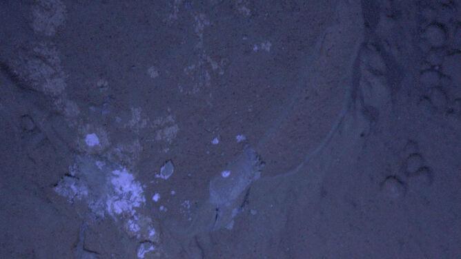 Curiosity sfotografował Marsa nocą