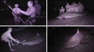 Nocne połowy rekinów nowym hobby dla odważnych